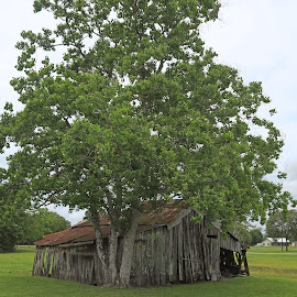 Decaying Barn by Ron Olivier - Buildings & Architecture Decaying & Abandoned ( decaying barn )