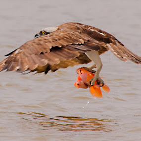 by Muhammad Yamani - Animals Birds
