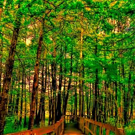 A Bridge of Green by Michael Grado - Nature Up Close Trees & Bushes ( nature, reserve, trees, cypress, bridge )