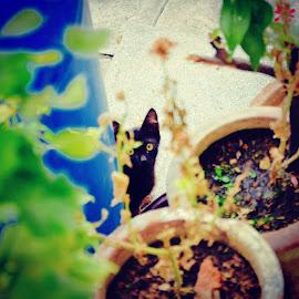 by عبدالقدير جدون من جانبازم - Animals - Cats Kittens