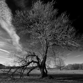 Tree in landscape by Petr Homola - Black & White Landscapes