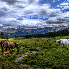 Horses in mountains by Len Lambert - Animals Horses ( clouds, mountains, stream, horses, white, brown )