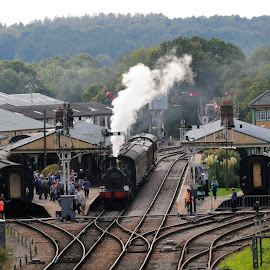 Steam over Horsted Keynes by DJ Cockburn - Transportation Trains ( se&cr, england, bluebell railway, railroad, 0-6-0, steam engine, historical, o1 class, steam locomotive, south eastern and chatham railway, horsted keynes station, vintage, antique, railway, west sussex, signal, vista, train, no 65 )