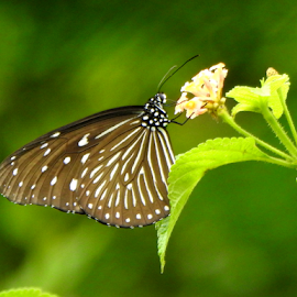 Wild Dreams by Vivek Sharma - Flowers Flowers in the Wild ( vivekclix, butterfly, nature, vivek, beauty in nature, flower,  )
