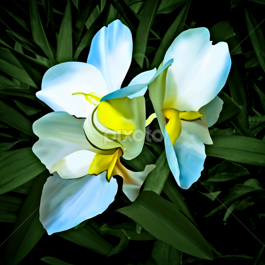 White Canna by Joseph Vittek - Illustration Flowers & Nature