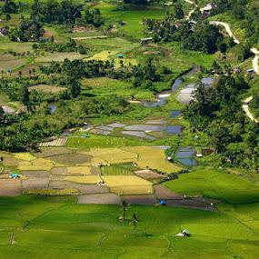Pattern Of Harau by Taufiqurrahman Setiawan - Landscapes Prairies, Meadows & Fields