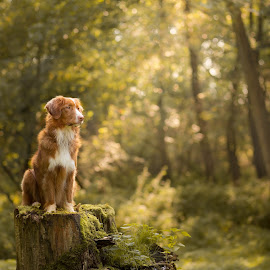 king of the forest by Magdalena Sikora - Animals - Dogs Portraits ( forestdog )