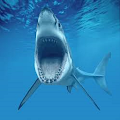 Shark Week Countdown APK for Ubuntu