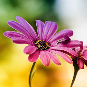 Don't let me go by Delia Galhotra - Nature Up Close Flowers - 2011-2013 ( plant, digiphotography, nature, green, summer, pink, flower, colours )