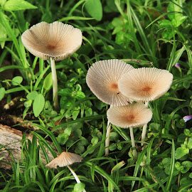 by Ismanto Lungsi - Nature Up Close Mushrooms & Fungi