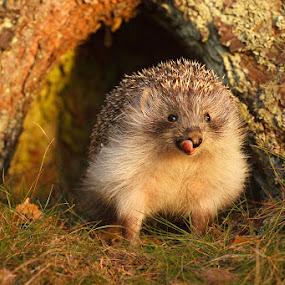 by Lukáš Lang - Animals Other Mammals (  )