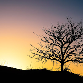 Sunset tree by Tzvika Stein - Nature Up Close Trees & Bushes