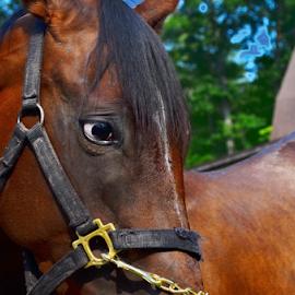 Sad Eyes by Teza Del - Animals Horses