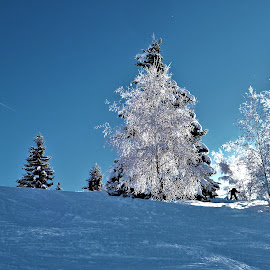 frosy tree by Ian Legon - Landscapes Travel ( ski, cold, tree, blue, snow, white, sport, no control, frosty )