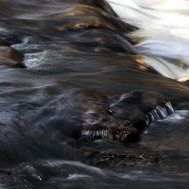 Fluid by Scott Block - Nature Up Close Water ( water, moving water, nature, motion, close up )