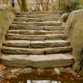 Stone Staircase by Robert Ratcliffe - City,  Street & Park  City Parks ( old, reflection, peaceful, park, stairway, stone, new york, central park, heritage,  )