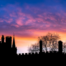 Oxford Tree by Matthieu Vermersch - Novices Only Landscapes ( colourful, tree, sunset, oxford, dusk )