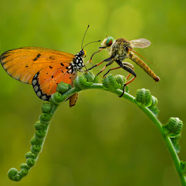 Interaction by Eko Romadhani - Animals Insects & Spiders ( plant, animals, macro, nature, insect, photography, animal )