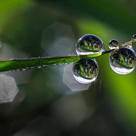 natural dews.... by Kawan Santoso - Nature Up Close Natural Waterdrops