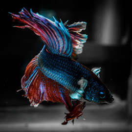 by Leon Ng - Animals Fish