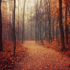 Autumn Walk LXX. by Zsolt Zsigmond - Landscapes Forests ( fog, autumn, fall, trees, forest, leaves, mist )