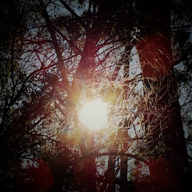Sun Through Trees by Sarah Harding - Novices Only Landscapes ( abstract, nature, novices only, trees, sun )