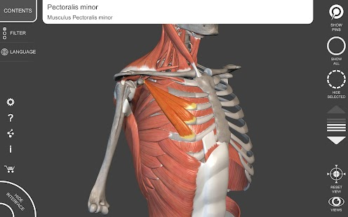 Muscle | Skeleton - 3D Anatomy APK Descargar