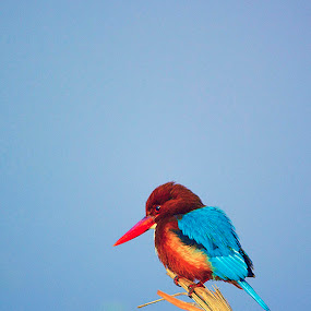 by Shikhar Srivastava - Animals Birds