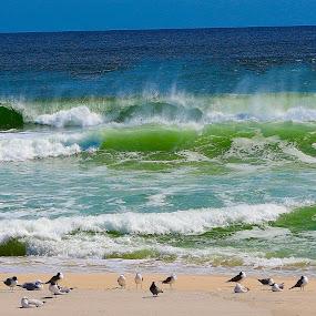 Ocean Surf by Cheryl Thomas - Landscapes Beaches ( spray, waves, seagulls, ocean, ocean view )
