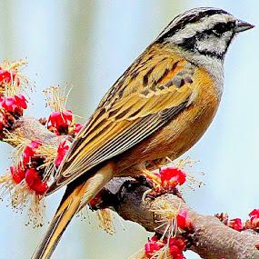 Bird by Muhammad Amin Zia - Animals Birds