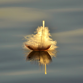 Feather  by Gosha L - Nature Up Close Other Natural Objects