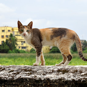 chiti by Subrata Chatterjee - Animals - Cats Portraits