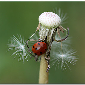 Dandy lady by Jon Harris - Animals Insects & Spiders