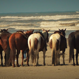 Horses on the sand  by Lavonne Ripley - Animals Horses