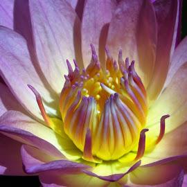 by Kinga Urban - Flowers Single Flower