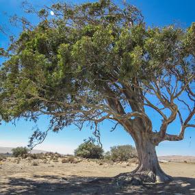 by Lanie Badenhorst - Nature Up Close Trees & Bushes