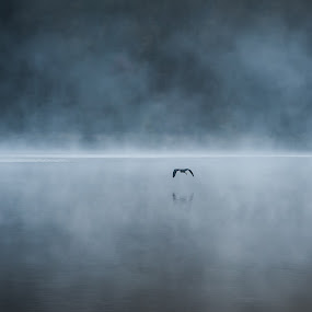 Blue Heron in Fog by William Ducklow - Landscapes Waterscapes