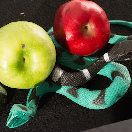 Forbidden Fruit by Gale Martineau - Food & Drink Fruits & Vegetables ( adam and eve, curled, tree, apple snake, apple, forbidden fruit )