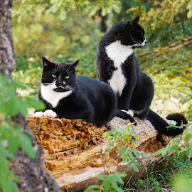 Mighty Woodland Hunters by Erica Lahoda - Animals - Cats Portraits ( cats, cat, tree, log, woods )