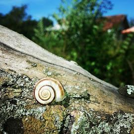 Snail by Milan Arsenov - Animals Other ( snails, nature, snail )