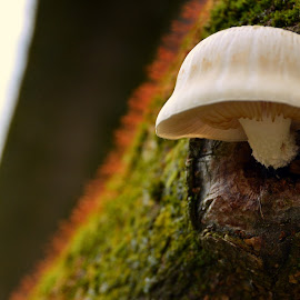 by Judith Cavanagh - Nature Up Close Mushrooms & Fungi ( mushroom, colors, trees, light, lichen )