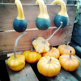 Fall  by SaraAnd Josiah - Food & Drink Fruits & Vegetables
