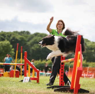 A lady training a border collie to jump