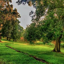 Bayou morning by Zeralda La Grange - Digital Art Places ( #louisiana, #green, #bayou, #morning, #sunrise )