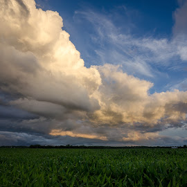 by Adam C Johnson - Landscapes Prairies, Meadows & Fields