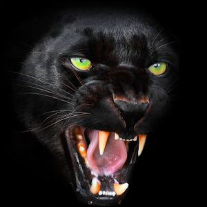 panther wallpaper android apps on google play