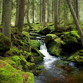 by Martin Kostohryz - Landscapes Waterscapes ( příroda, les, hory, krajina, šumava, voda, podzim )