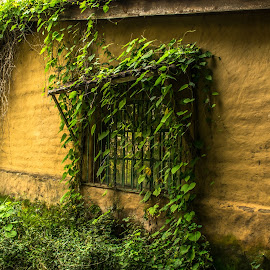 One Window by Pilar Gonzalez - Buildings & Architecture Other Exteriors ( amatlan, one window, window, rustic building, climbing plant )