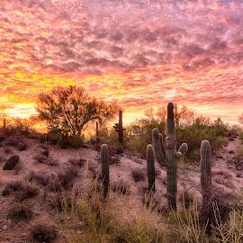 Cactus Sunrise by Charlie Alolkoy - Landscapes Sunsets & Sunrises ( tucson )