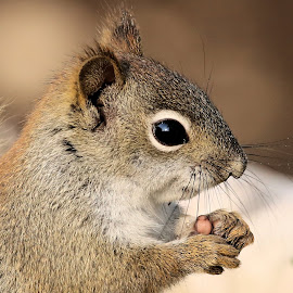Saturdays Best 46 by Terry Saxby - Animals Other Mammals ( canada, terry, goderich, ontario, saxby, nancy, squirrel )